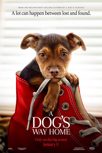 Dog's Way Home, A - in theatres 01/11/2019